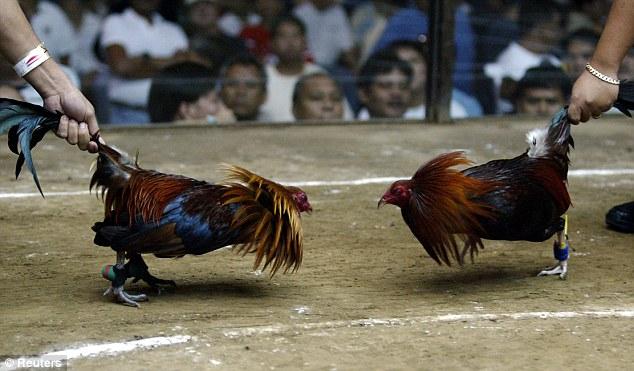 Tips Main Judi Taruhan Sabung Ayam S128 yang Terampuh